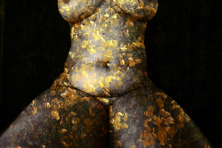 Corpus Naturae par Sabrina Ambre Biller